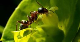 Aardvark Pest Control Services