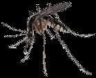 Aardvark Mosquito Control